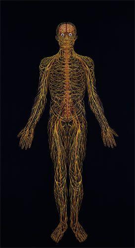 МРТ нервов