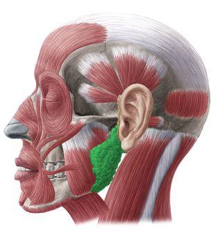 МРТ слюнных желез