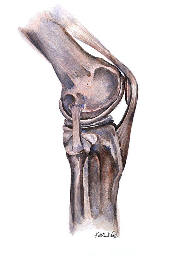 Анатомия коленного сустава МРТ