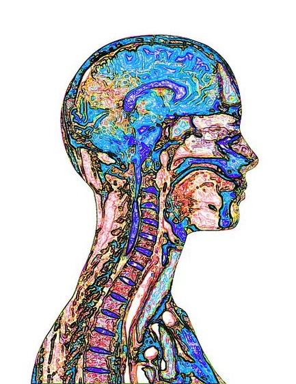 Снимки МРТ и КТ. Заболевания головы и шеи