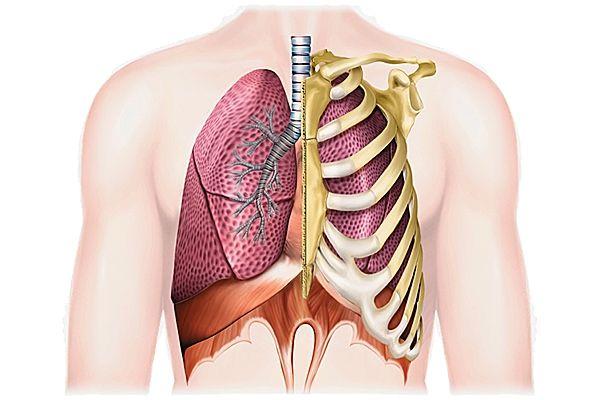 Снимки МРТ и КТ. Патологии грудной клетки
