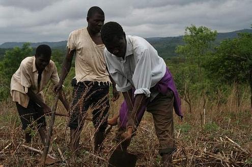 landbouw in Malawi
