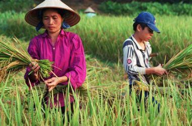 vietnam_landbouw_346pxwccworldbank.jpg