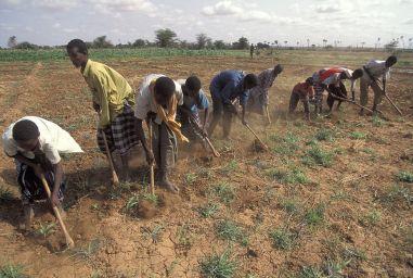 kenia_landbouw_ccwb.jpg