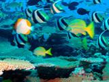 koraalrif20hawai20foto20noaa.jpg