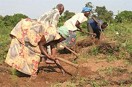 Boer(inn)en in Afrika