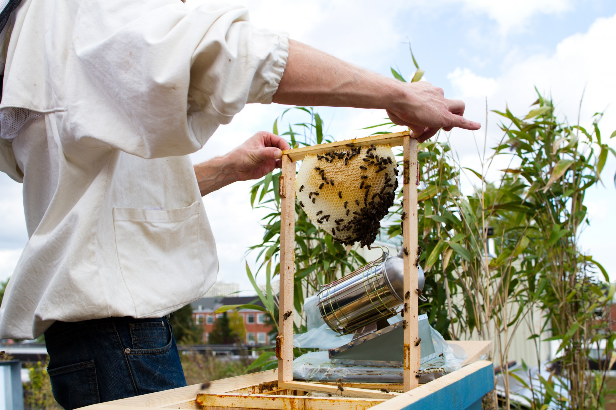 Stadsimker Geert van Kerckhove inspecteert de bijen