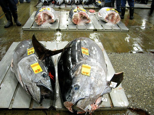 tonijn-nee.jpg