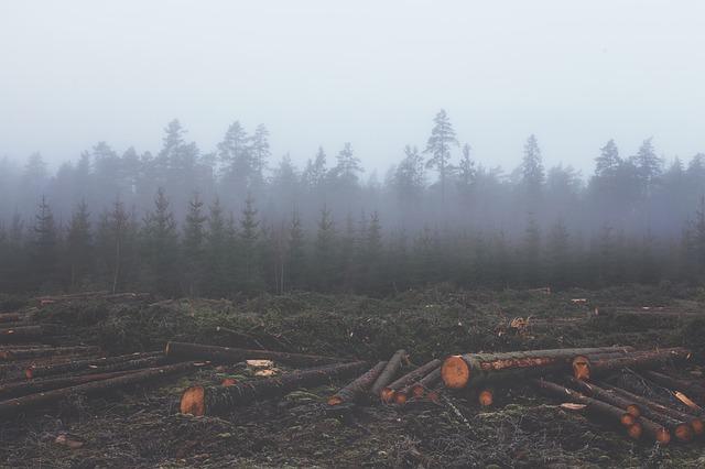 ontbossing.jpg