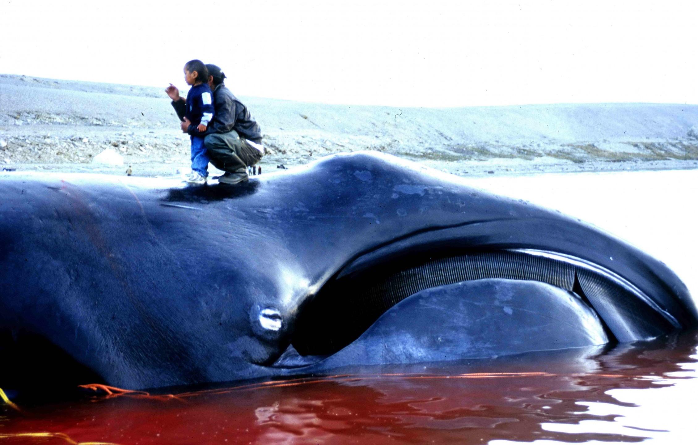 bowhead_whale_2002-08-10.jpg