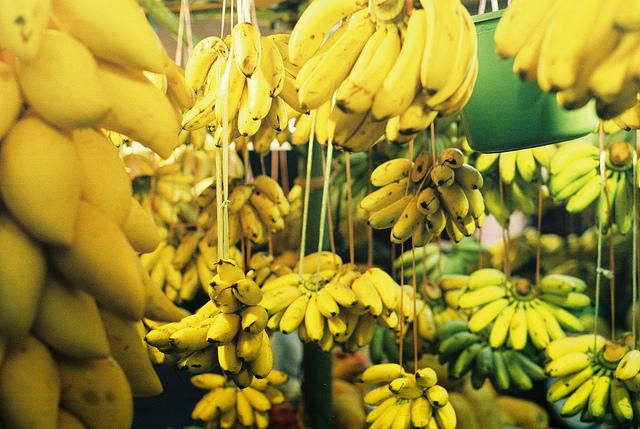 De banaan wordt bedreigd door een schimmel