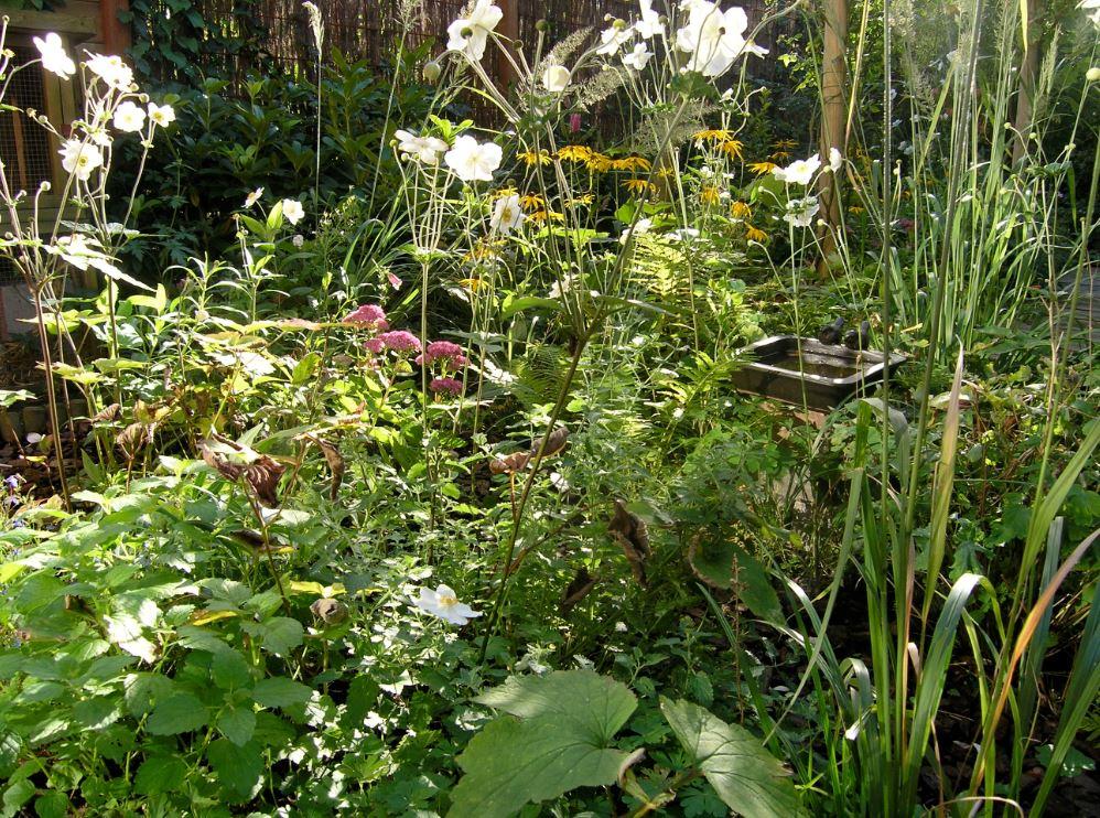 moestuin ilse ariens bloemen