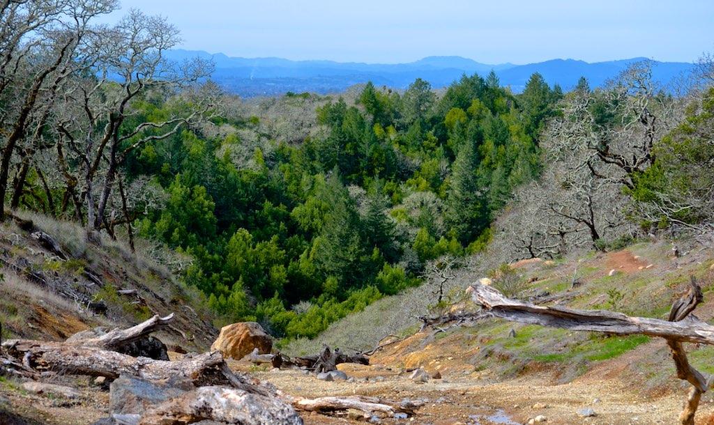 droogte Californië doodt miljoenen bomen