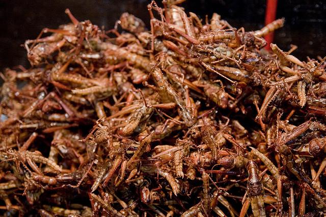 Insectenburgers, recept