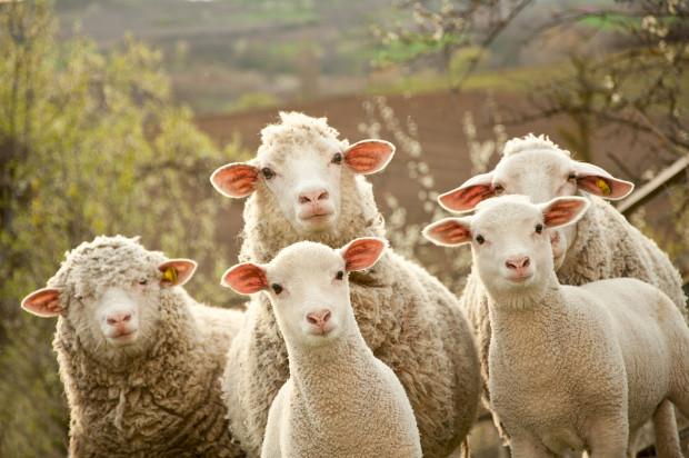 liever geen klonen van boerderijdieren meer