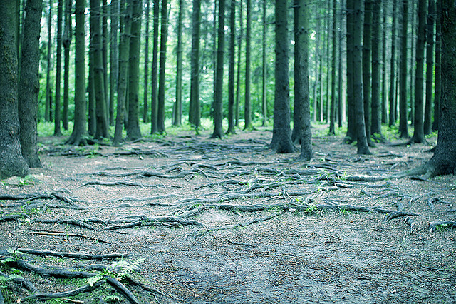 russische wouden last van pesto