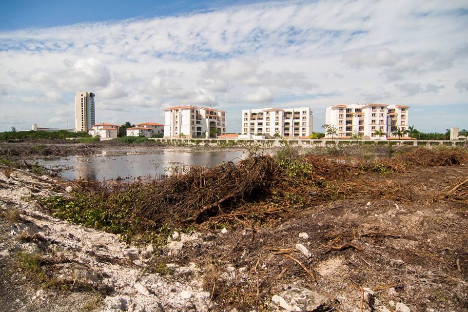 gekapte mangrove naast de aanbouw van nieuwe appartementen