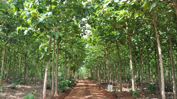 Herbebossing in Ghana is goed voor klimaat