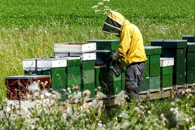 bijenaantallen stijgen weer
