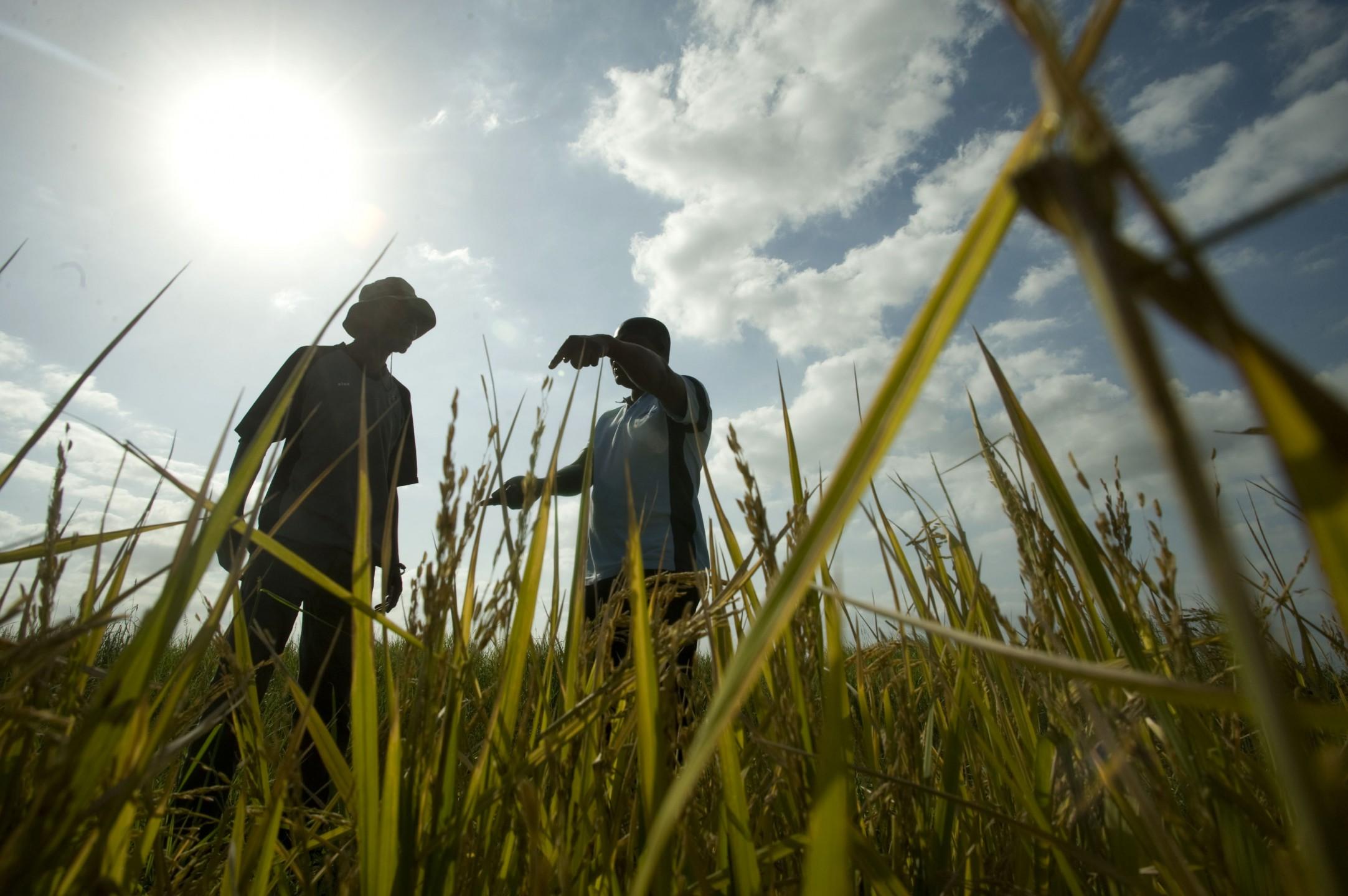 Landbouw in Mozambique