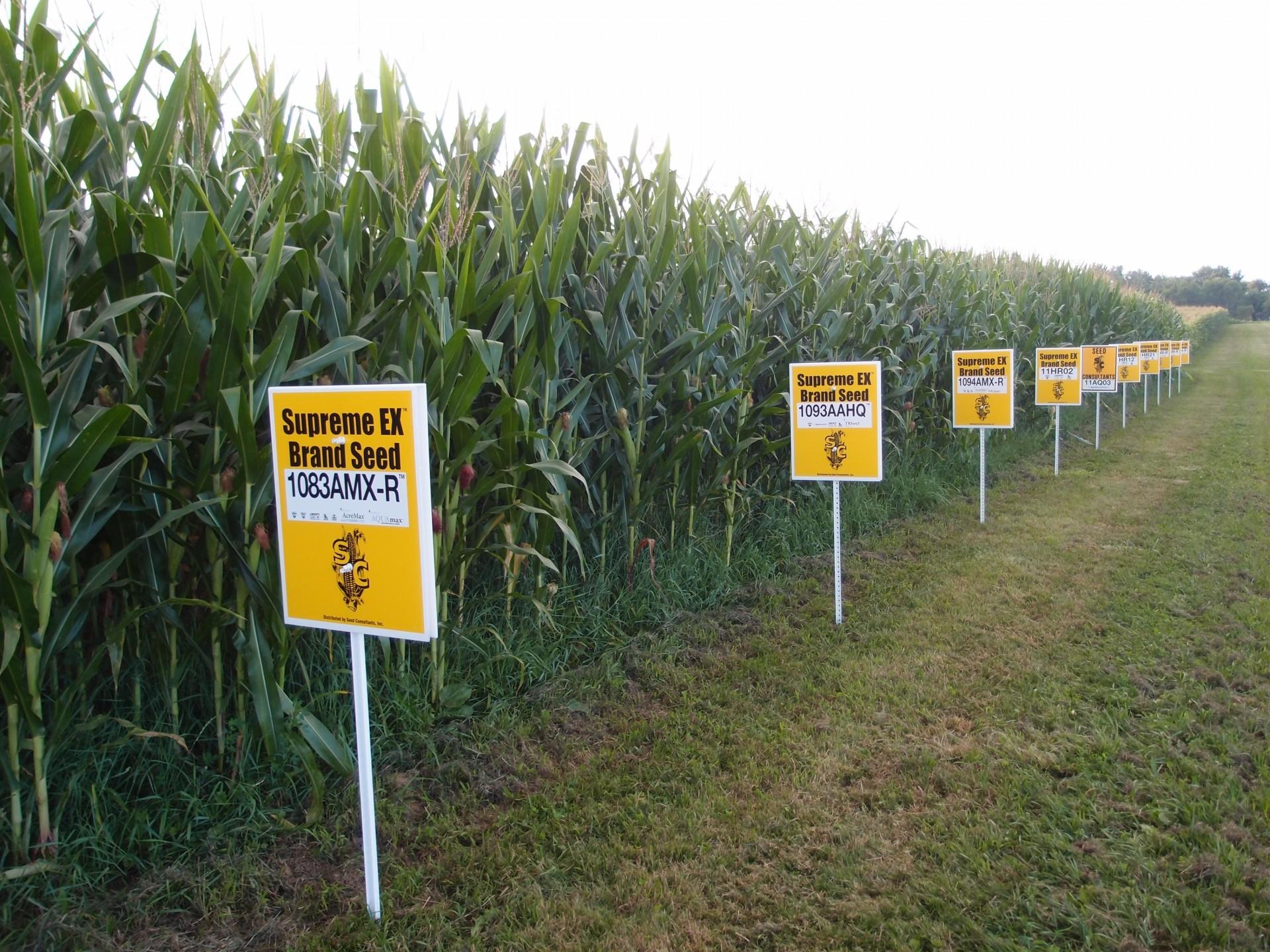 Onderzoeksveld met mais-variëteiten