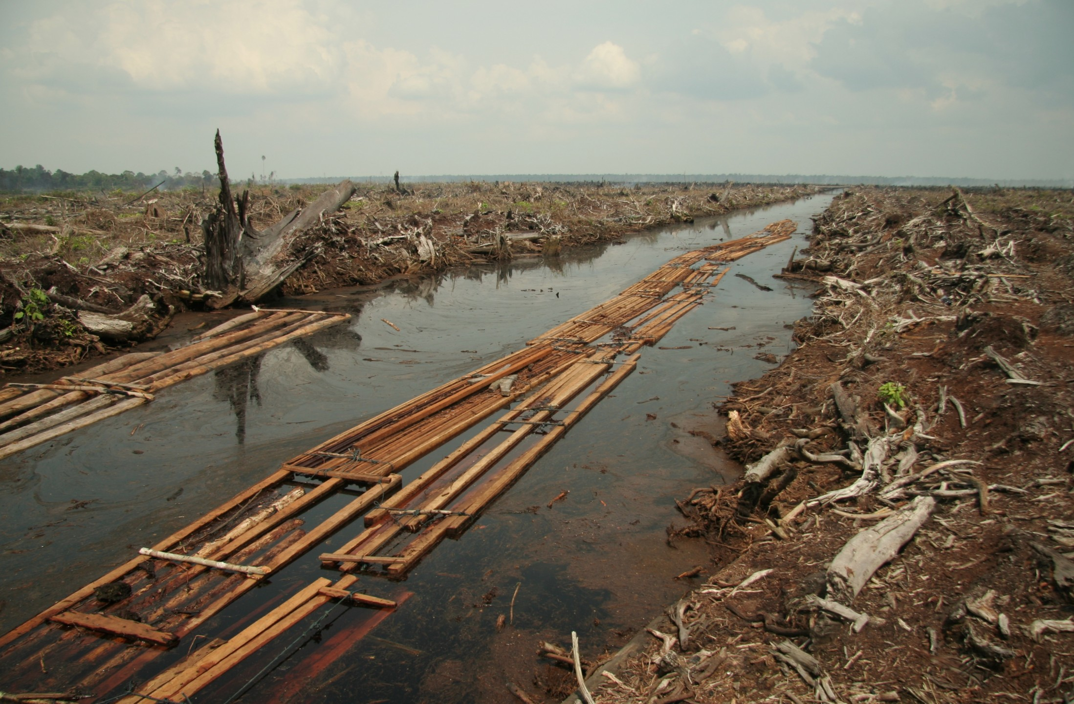 riau_deforestation_2006.jpg
