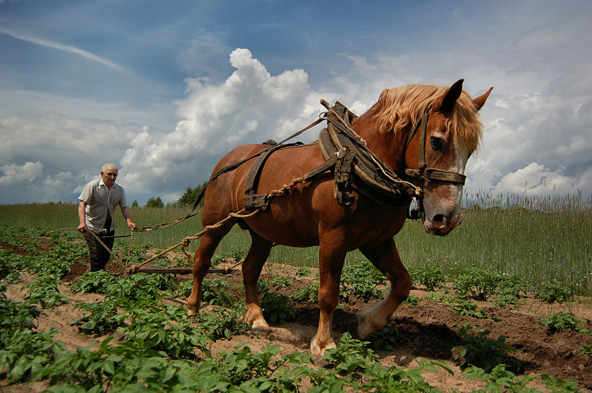 Traditionele landbouw