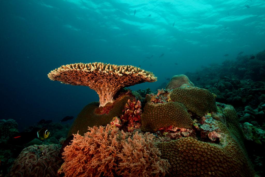 koraal 3d-printer