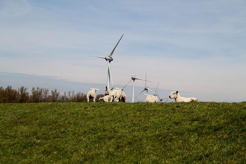 noordoostpolder-windmolenpark_westermeerdijk_2015_-028_1.jpg