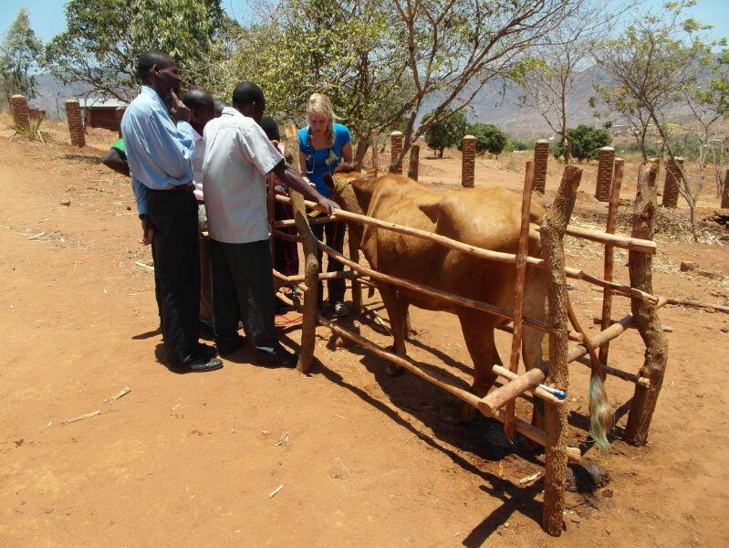 Onderzoeksdier in Malawi