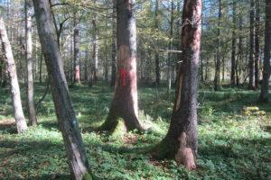 013-Rode-pijlen-om-meerdere-bomen-aan-te-duiden