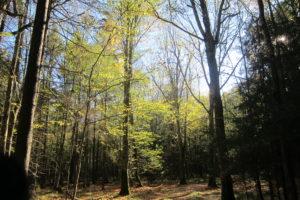 023-Ondergaande-zon-verlicht-het-bos