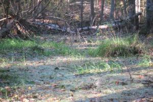 028-Poelen-in-het-elzenbroek-bos-met-op-achtergrond-omgevallen-fijnsparren