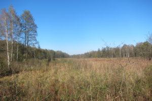 034-Woest-rietland-aan-de-rivier-de-Nareweka