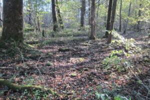 035-Een-afstervende-eik-zorgt-voor-een-compostlaag-om-zich-heen-van-verterende-takken-twijgen-en-bladeren