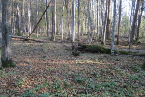 079-Recent-aan-natonaal-park-toegevoegd-oud-bos
