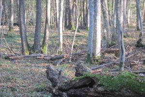 081-Een-poel-in-het-bos
