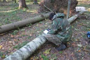 092-Woudwachter-Wojtek-noteert-de-grote-van-een-kap-locatie-boomsoorten-met-een-GPS-tablet