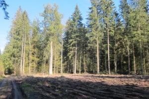 095-Omgeploegde-kapvlakte-met-honderdjarige-eikenbomen-er-naast