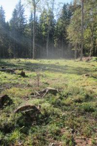 096-Kapvlaktes-zorgen-voor-onnatuurlijke-ruigten-midden-in-het-bos