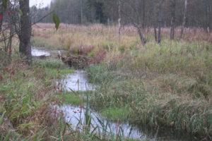 107-Beverdam-in-het-riviertje-de-Lutownia