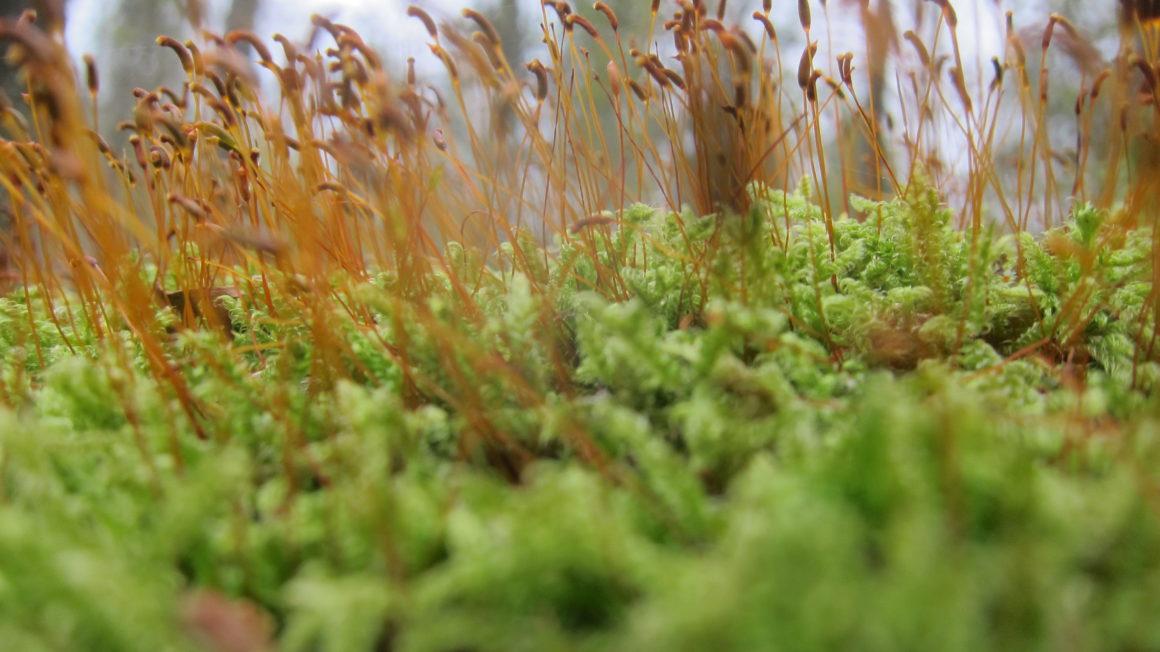 125-Landschap-met-mos