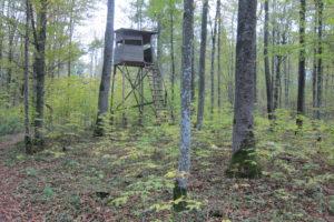 136-De-begrazingsdruk-in-het-hele-woud-van-Bialowieza-is-extreem-laag-en-niet-zonder-reden