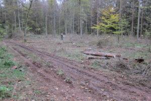 140-Vermoedelijk-eerste-kapvlakte-aan-het-adelaarspad-die-het-resultaat-is-van-uitbreiding-kapquota-boswachterij-Bialowieza