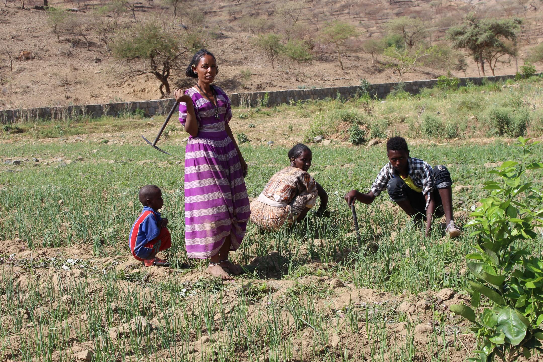werken op de kwekerij van de gemeenschap