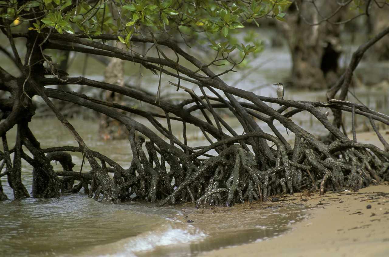 martjan_mangrove.jpg