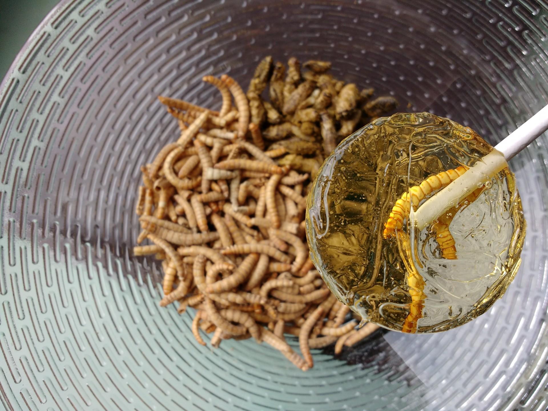 Meelworm cognac lolly en garlic & herb buffalowormen