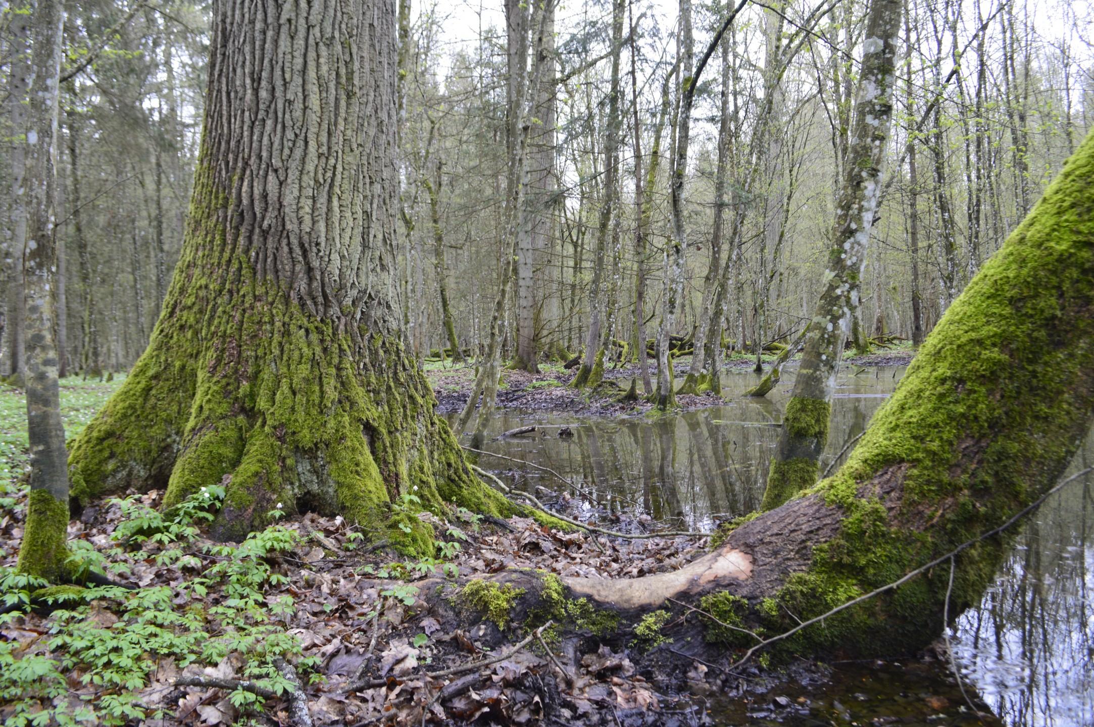 Poel in het woud