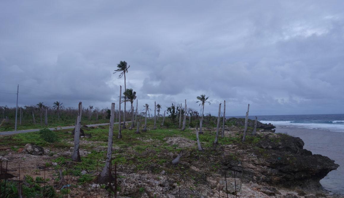 geknakt palmen op de filippijnen door orkaan Haiyan