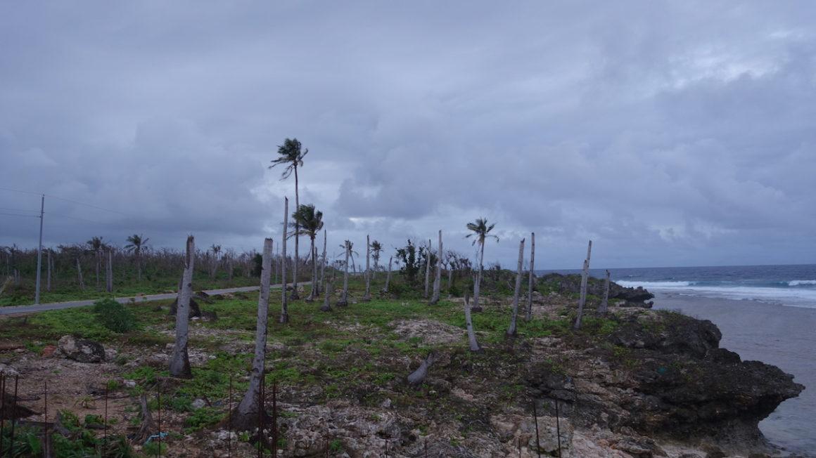geknakte-kokospalmen12